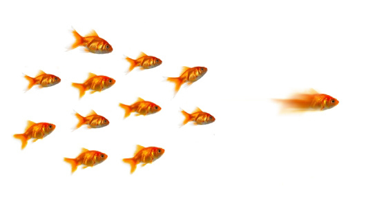 Digital Thought Leadership Fishies